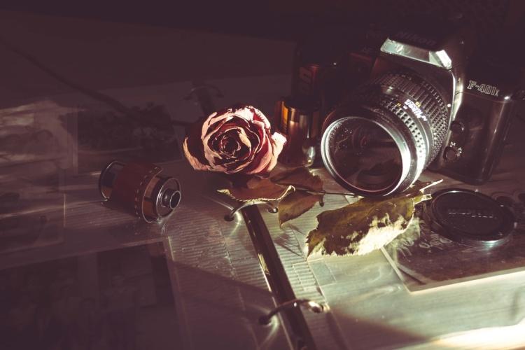 rose and camera