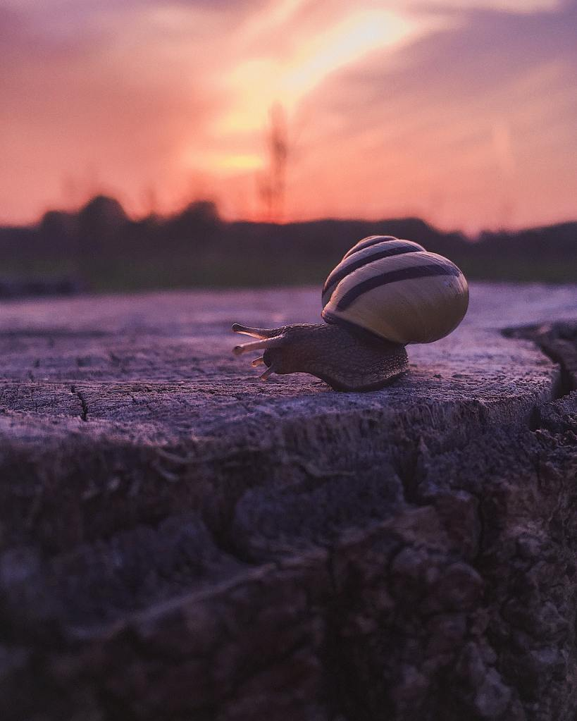 snail navigating a rock while the sun sets in the distance